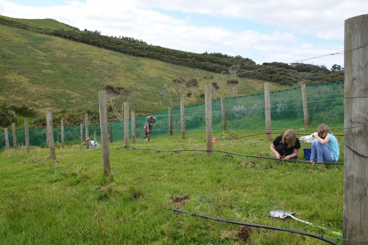 Everyone working hard to get the vines in.